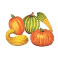 Where to rent CUTOUT, FALL SQUASH PK in St. Helens OR