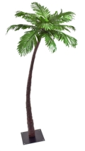Where to rent PALM TREE, 6 FOOT in St. Helens OR