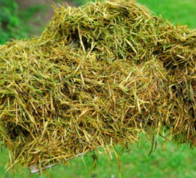 Where to find LAWN MULCH, HALF BALE 30 in St. Helens
