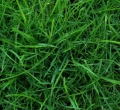 Where to rent Seed, Grass Supreme Mix 5 in St. Helens OR