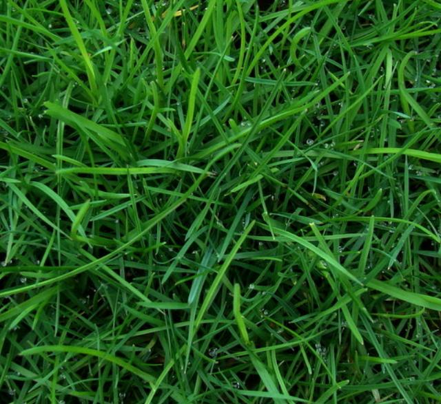 Where to find Seed, Grass Supreme Mix 25 in St. Helens