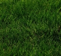 Where to rent Seed, Grass Shade Mix 50 in St. Helens OR
